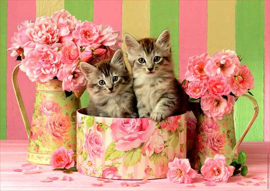 Картина по номерам 40x50 Два серых котенка в розовых цветах