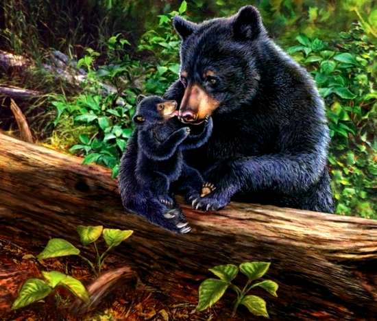 Картина по номерам 40x50 Медведица играет с медвежонком