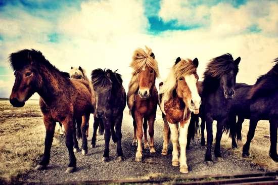 Картина по номерам 40x50 Стадо лошадей на дороге